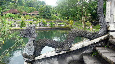 Photograph - Dragon By Pool by Jack Edson Adams