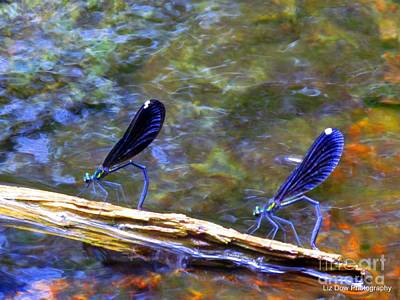 Jordan Stream Photograph - Dragon Flies Of Jordan Stream II by Elizabeth Dow
