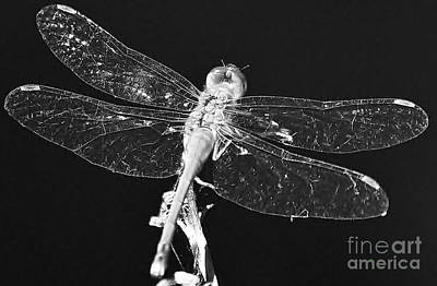 Photograph - Dragon Fly by Al Fritz