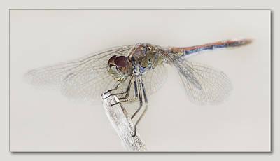Dragon Fly Art 01 Original