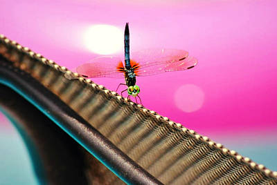Blue Dragon Fly Photograph - Dragon Fly  by Chastity Hoff