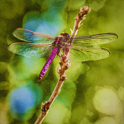 Photograph - Dragon Fly Or Not Painterly by Scott Campbell