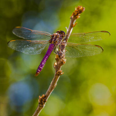 Dragonfly Photograph - Dragon Fly Or Not by Scott Campbell