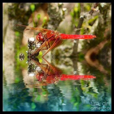 Photograph - Dragon Fly Red by Susan Garren