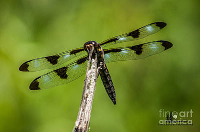 Photograph - Dragon Fly by Ronald Grogan