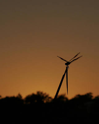 Photograph - Dragon Fly Silhouette by Charles McKelroy