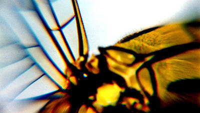 Photograph - Dragon Fly Wing by David Rich