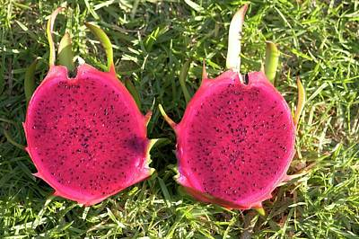 Bright Colours Photograph - Dragon Fruit by Photostock-israel