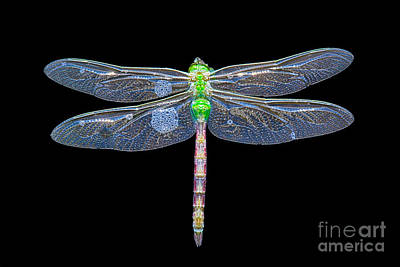 Damsel Fly Photograph - Dragon In Water by Todd Bielby