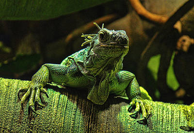 Photograph - Dragon Lizard by Tony Grider