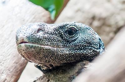 Photograph - Dragon Lizzard Portrait Closeup by Alex Grichenko
