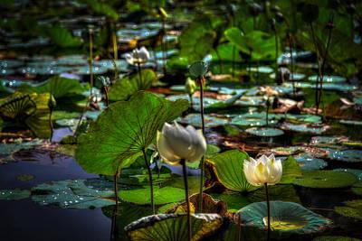Dragon Lotus Original