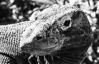 Photograph - Dragon Skin by Nicholas Evans