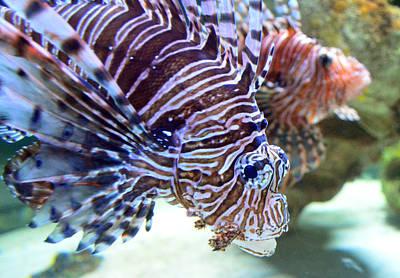 Dragonfish In Tandem Print by Sandi OReilly