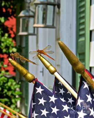 Photograph - Dragonflies In Full Salute by Nancy Patterson