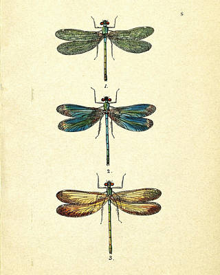 Vivid Drawing - Dragonflies by Pati Photography