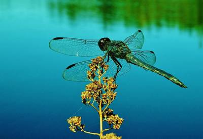 Dragonflies Photograph - Dragonfly 2 by Sarah Pemberton