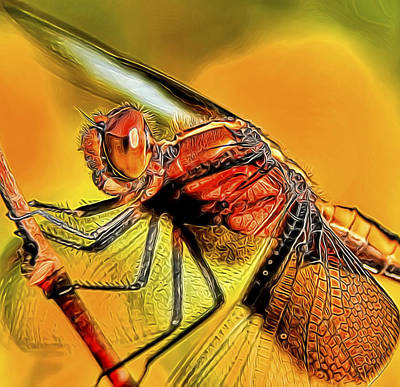 Dragonfly 2 Art Print