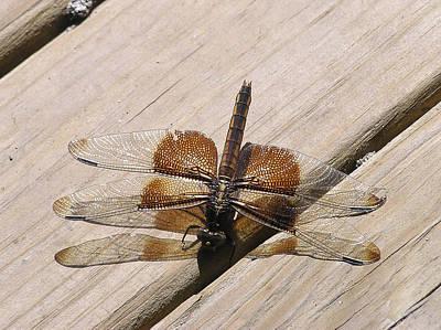 Photograph - Dragonfly by Adam Johnson