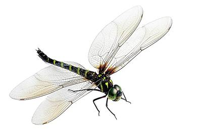 Dragonflies Photograph - Dragonfly by Alex Hyde