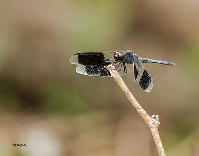 Photograph - Dragonfly by Allen Sheffield