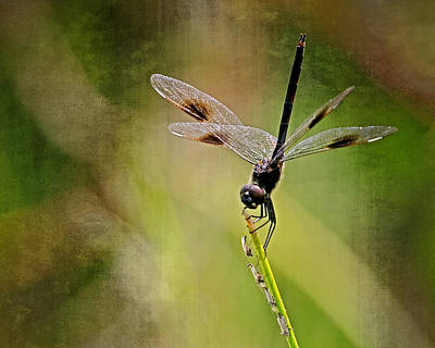 Art Print featuring the photograph Dragonfly And Friends by Dawn Currie