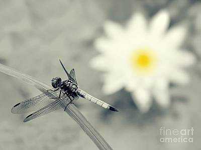 Dragonfly And Water Lily Art Print by Sharon Woerner