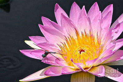 Photograph - Dragonfly And Waterlily Two by Byron Varvarigos