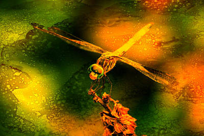Photograph - Dragonfly Art 2  by Lesa Fine