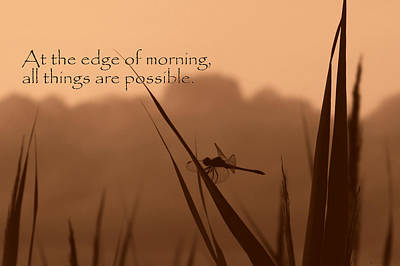 Photograph - Dragonfly At Edge Of Morning  by Deborah Smith