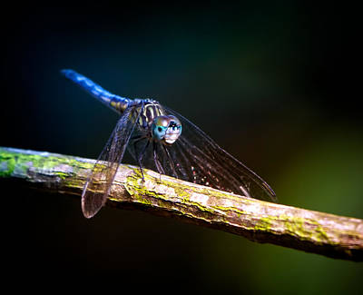 Florida Wildlife Photograph - Dragonfly Beauty by Mark Andrew Thomas