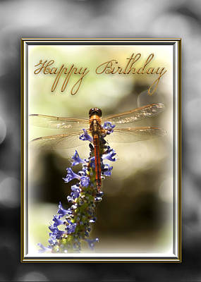 Blue Dragon Fly Photograph - Dragonfly Birthday Card by Carolyn Marshall