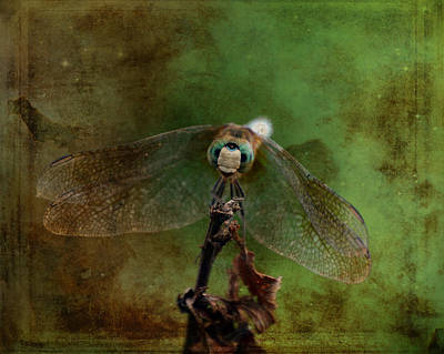Photograph - Dragonfly Blue Dasher Antiqued by Lesa Fine