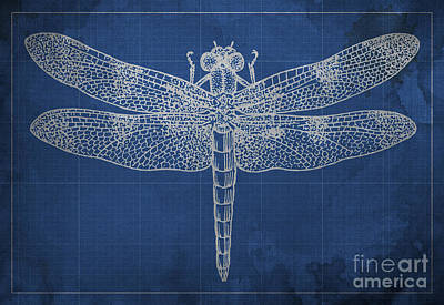 Animal Drawing - Dragonfly Blueprint Blue by Pablo Franchi