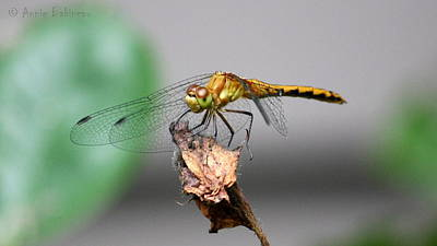 Photograph - Dragonfly Dame by Annie Babineau