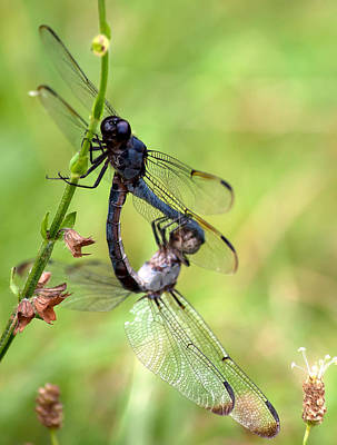 Space Photographs Of The Universe - Dragonfly Dance by Photos By  Cassandra