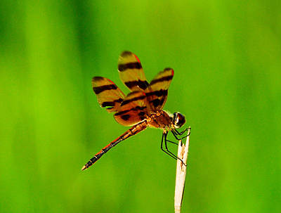 Dragonfly Photograph - Dragonfly by David Mortenson