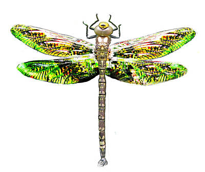 Photograph - Dragonfly Design by Tom Conway