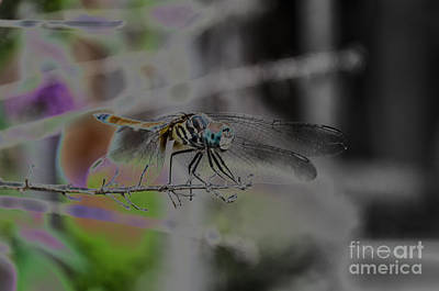 Photograph - Dragonfly by Donna Brown
