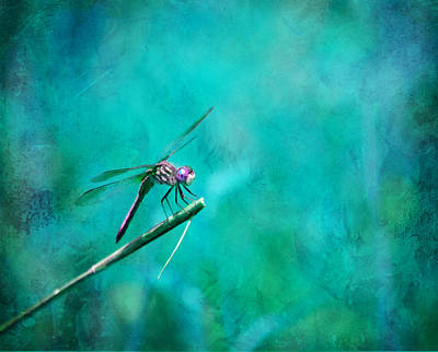 Photograph - Dragonfly Dreams by Deena Stoddard