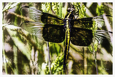 Insect Painting - Dragonfly Essence by Barry Jones