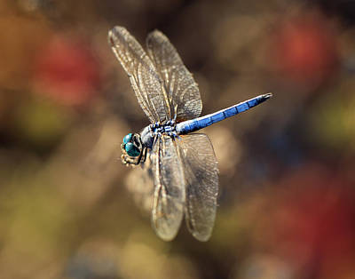 Dragonfly Floating Art Print