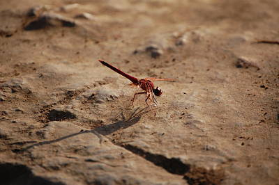 Shadow Digital Art - Dragonfly by Gina Dsgn