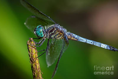Dragonfly Having Summer Fun Art Print
