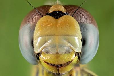Dragonflies Photograph - Dragonfly Head by Nicolas Reusens