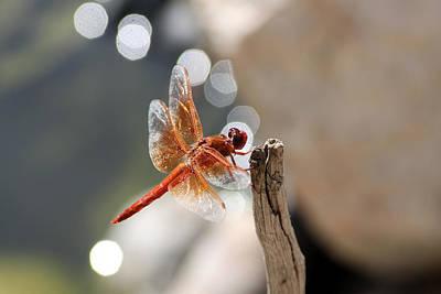 Dragonfly Highlights Art Print