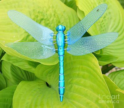 Photograph - Dragonfly Hosta by Rachel Munoz Striggow