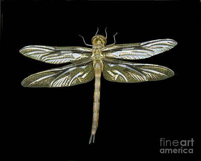 Photograph - Dragonfly I by Carol McCutcheon
