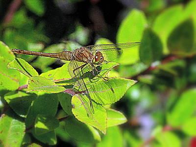 Photograph - Dragonfly In Green by Suzy Piatt