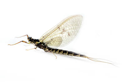 Dragonfly In Macro Art Print by Tommytechno Sweden